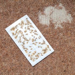 get rid of carpet moths